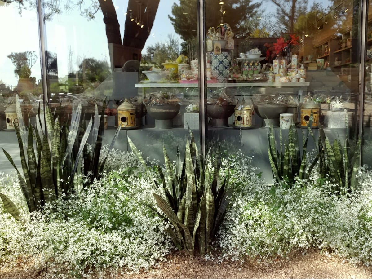 San Antonio Botanical Garden Blossoms With Grand Reopening
