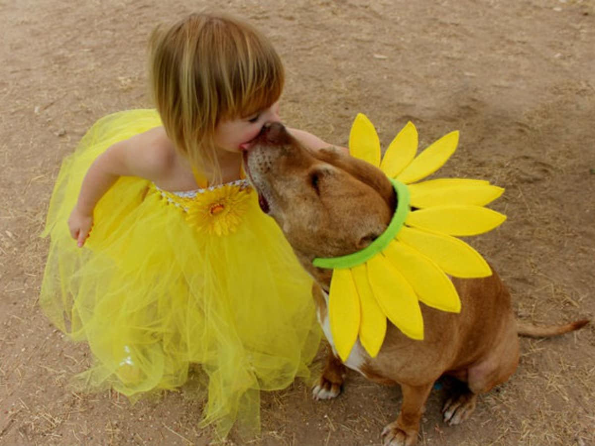 Austin Pets Alive adoptable female pit bull mix Elsie plays with a human friend