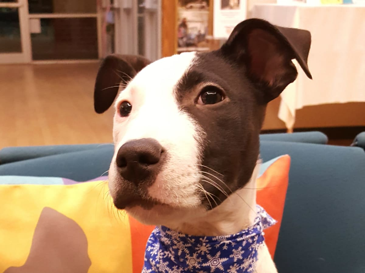 Hoffman - Pet of the Week - Sky - Super Bowl Puppy Bowl