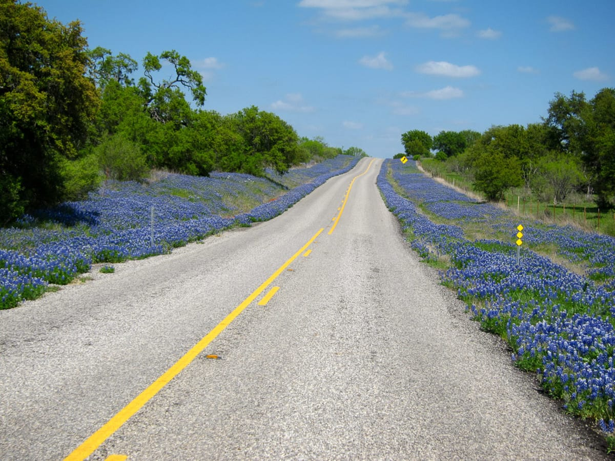 News_wildflowers_bluebonnets_road_by Sassy Frassy Lassie