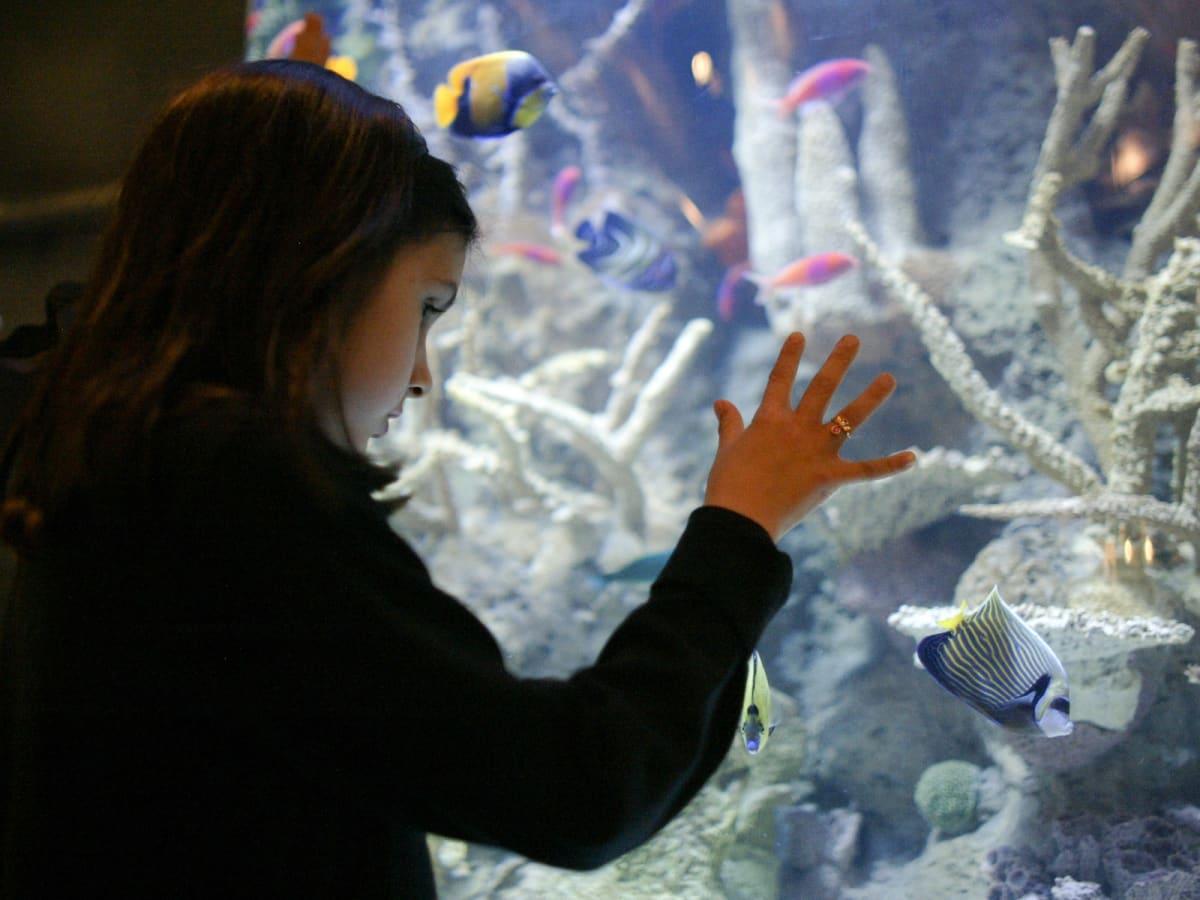 Places-Unique-Downtown Aquarium