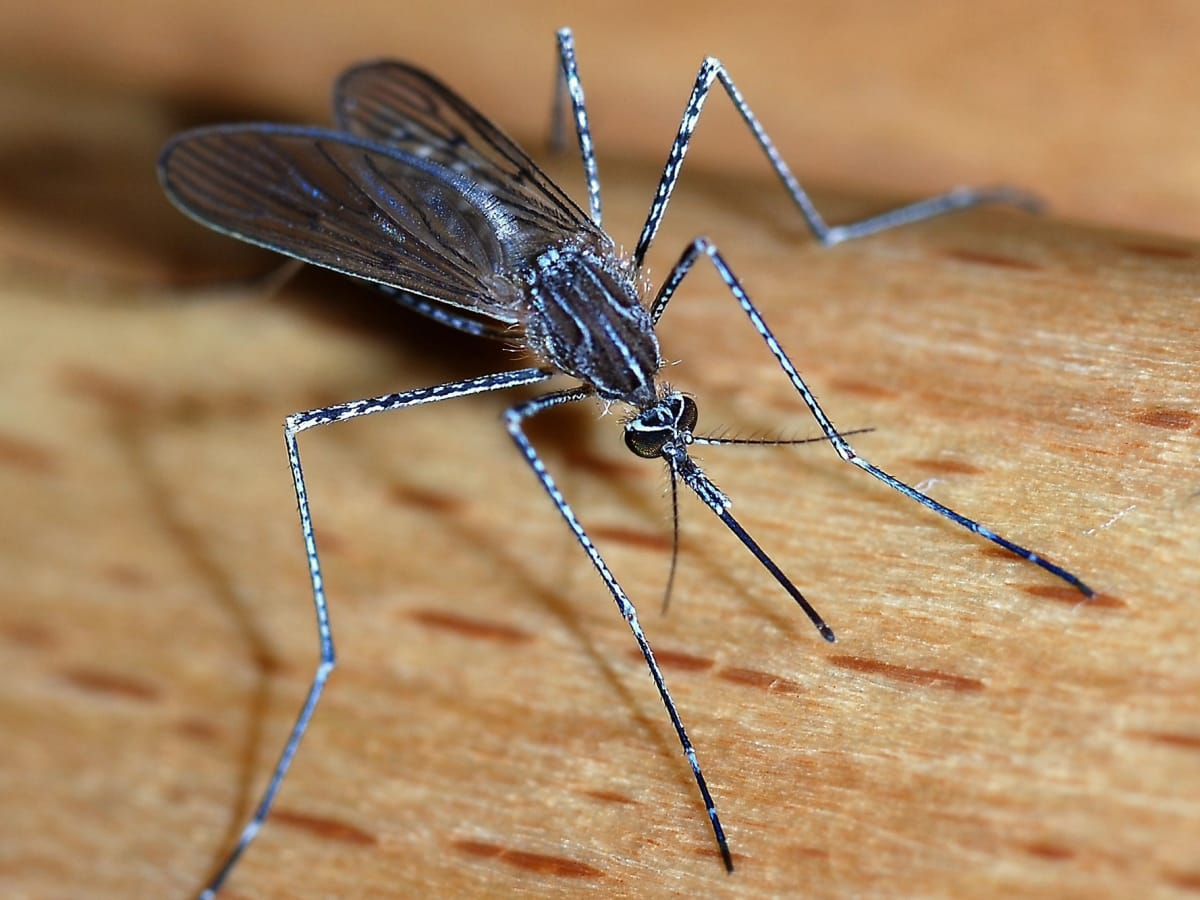 How to survive mosquito season in Austin: 6 natural remedies that ...