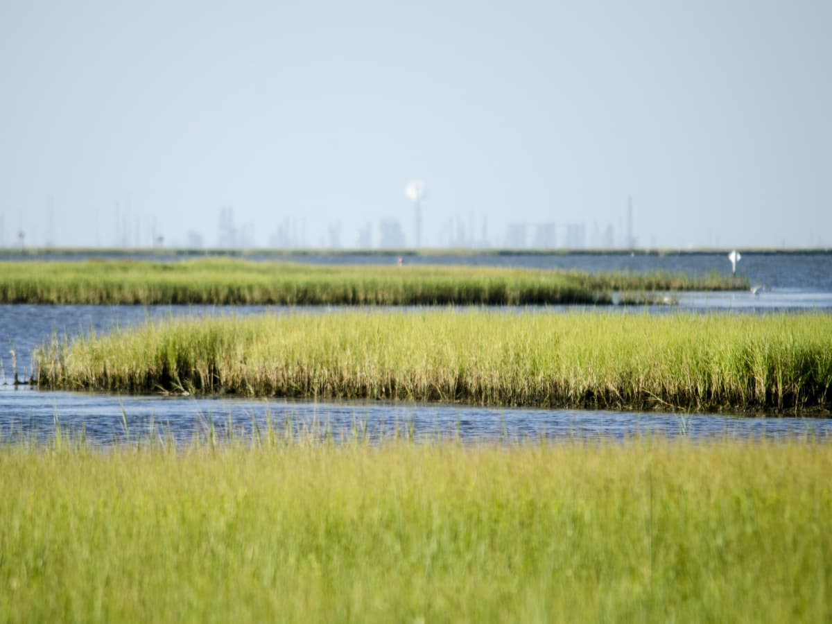 Galveston Bay wetlands