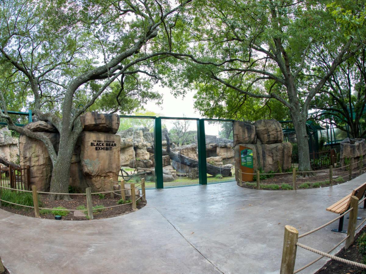 Houston Zoo new black bear exhibit