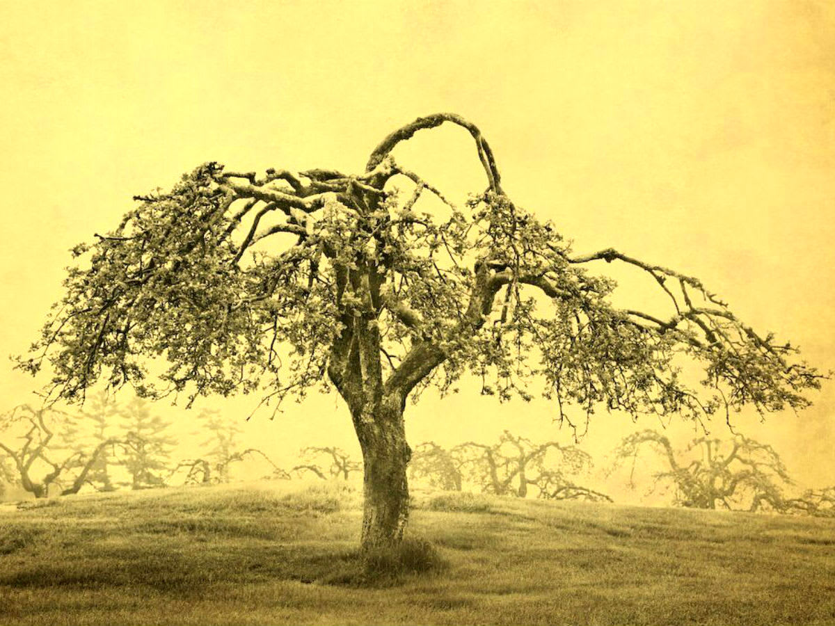 Afterimage Gallery presents Joyce Tenneson: Trees and the Alchemy of Light