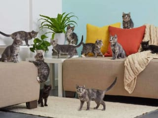 The Cat Connection presents Home Fur the Holidays Dallas Cat Cafe