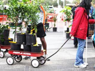 Urban Harvest presents 17th Annual Fruit Tree Sale