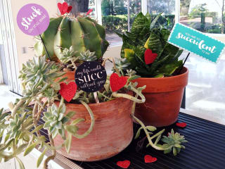 Texas Discovery Gardens presents Love is in the Air