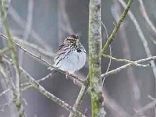 Dogwood Canyon Audubon Center presents Winter Bird Count