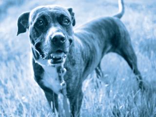 Barkworthies Chews Rescue Program