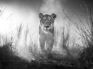 Wildlike Photography by David Yarrow