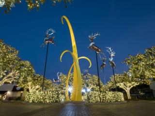 The Plaza Tree