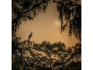 Sun to Moon Gallery presents Caddo Lake Exposed