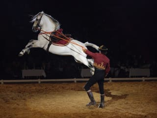 Gala of the Royal Horses with trainer and horse jumping