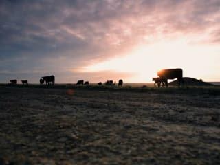 scene from the movie Hanna Ranch