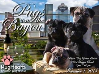 """Pugs on the Bayou"" benefiting PugHearts Houston Pug Rescue"