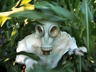 Chipotle Green Film Series: GMO OMG
