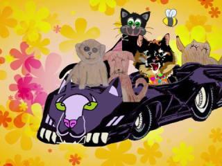 Cute Cat Music Video: Peace Love & Rescue