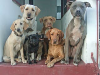 News_dogs_porch