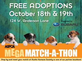 Mega Match-a-thon Adoption Event ASPCA 2014