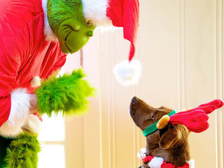 Blue Dog Rescue Holiday Pet Photo Shoot with The Grinch - December 2014