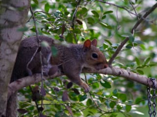 "Houston Arboretum Class: ""Habitat Helpers: Birds, Bees and Squirrels"""