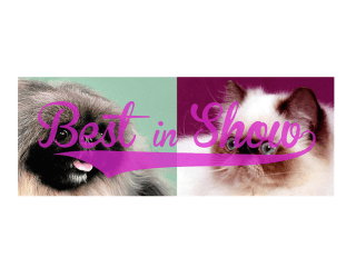 "Box 13 ArtSpace hosts ""Best in Show"""
