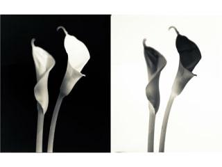 Kettle Art Gallery presents In Bloom