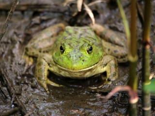Houston Arboretum presents Arboretum at Night: <i>Frogs</i>
