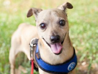 Austin Pets Alive!, Austin Animal Center, and Austin Humane Society presents SOS: Save Our Seniors