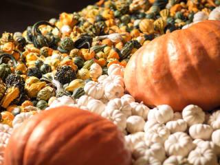 NorthPark Center presents Pumpkin Patch