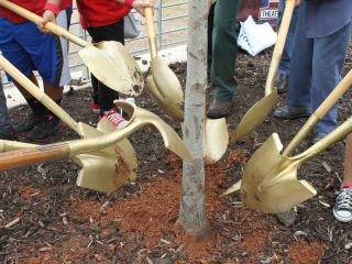State of Texas Arbor Day 2017