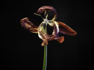 John Herrin: Flower #6b