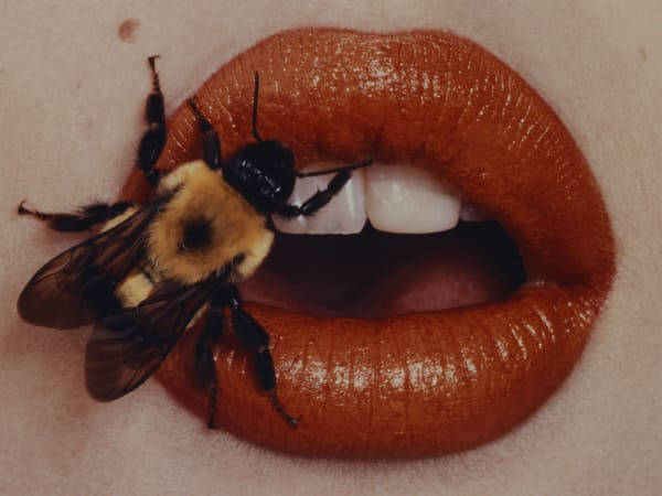 Dallas Museum of Art presents Irving Penn: Beyond Beauty