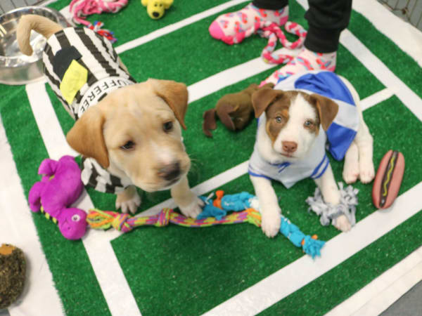 Austin Humane Society presents 10th Annual Puppy Bowl