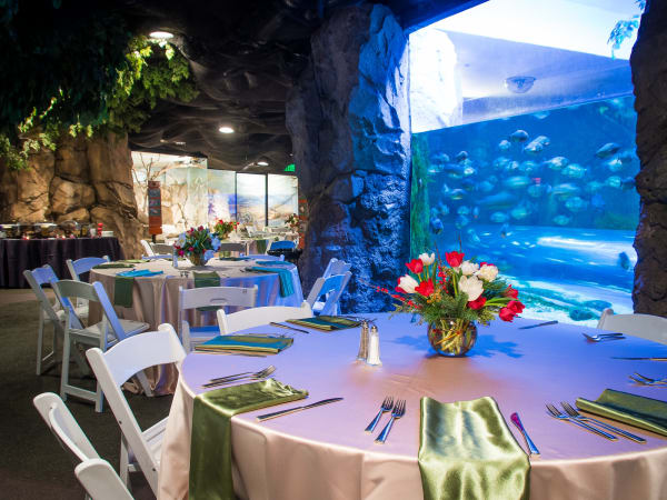 Houston Zoo, Under Sea Dinner, Feb. 2016
