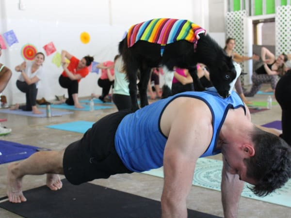 Goat yoga GOGA Austin