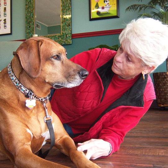 best dog grooming