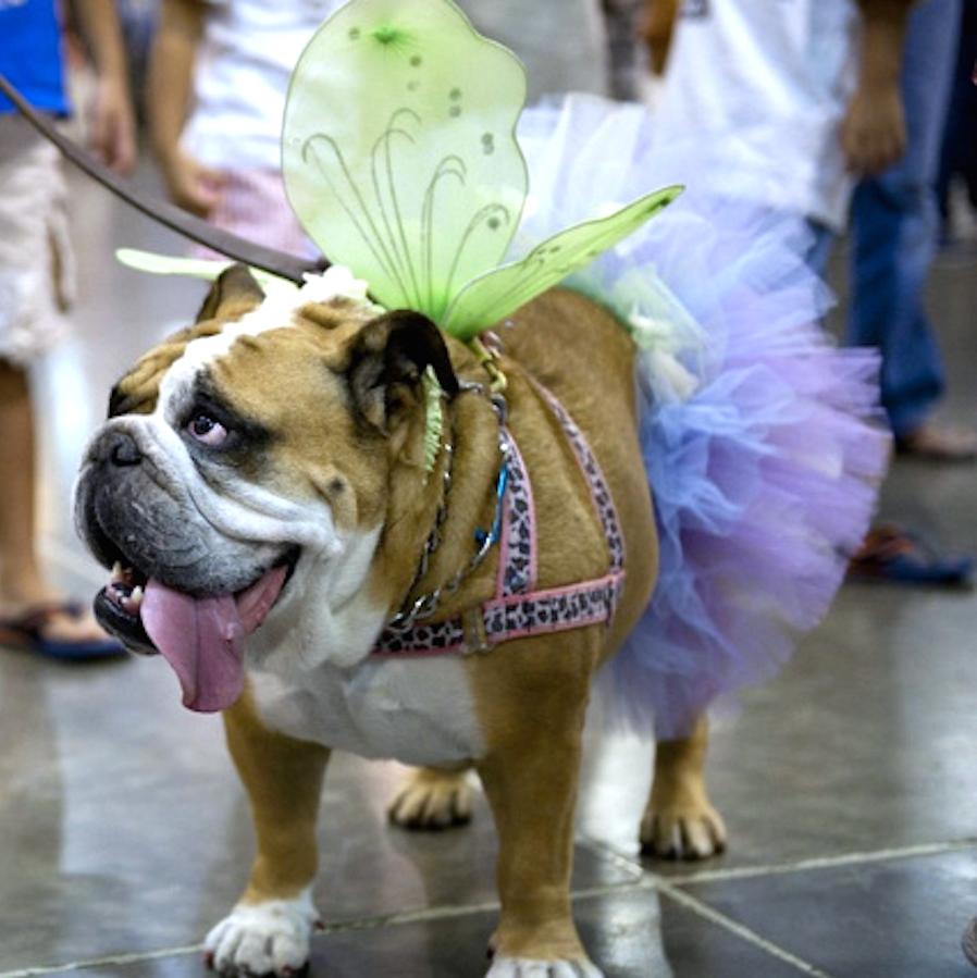 Houston World Series of Dog Shows