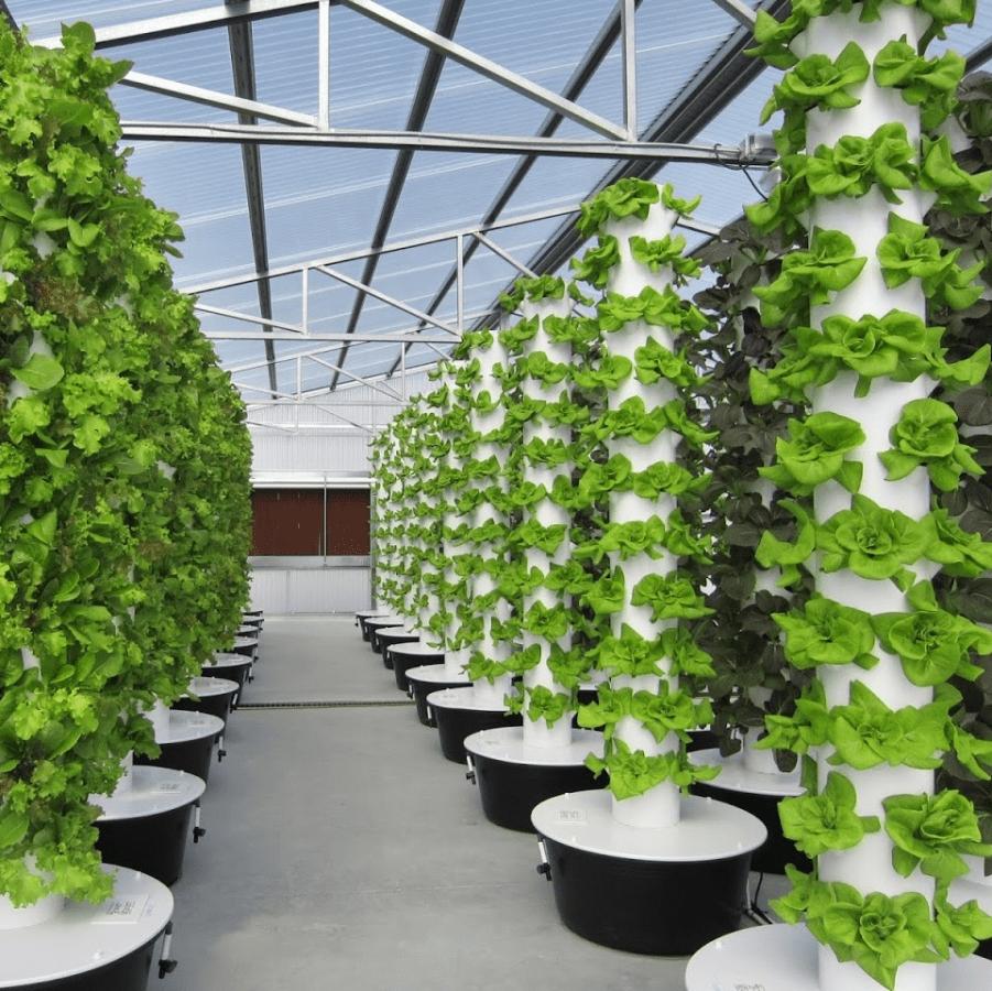 Dallas Urban Farms
