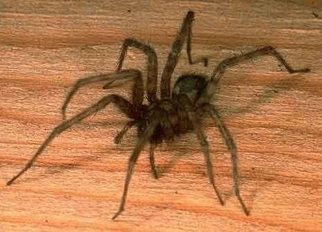 Примета увидеть паука вечером в квартире