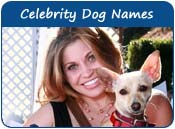 Celebrities dogs names male