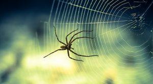 Черные и серые пауки