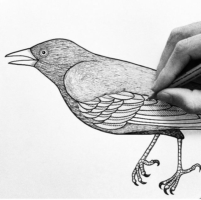 Héctor Reez - Fotografía de ilustración de ave con la mano del artista haciendo trazos sobre el papel