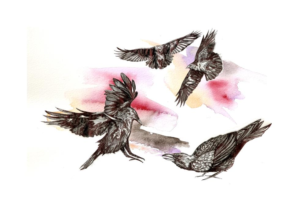 Tita López - cuatro aves sobrevolando un lienza blanco con tintes rosas