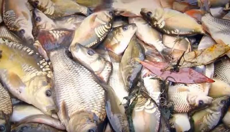 Рыбное хозяйство бизнес план скачать бесплатно