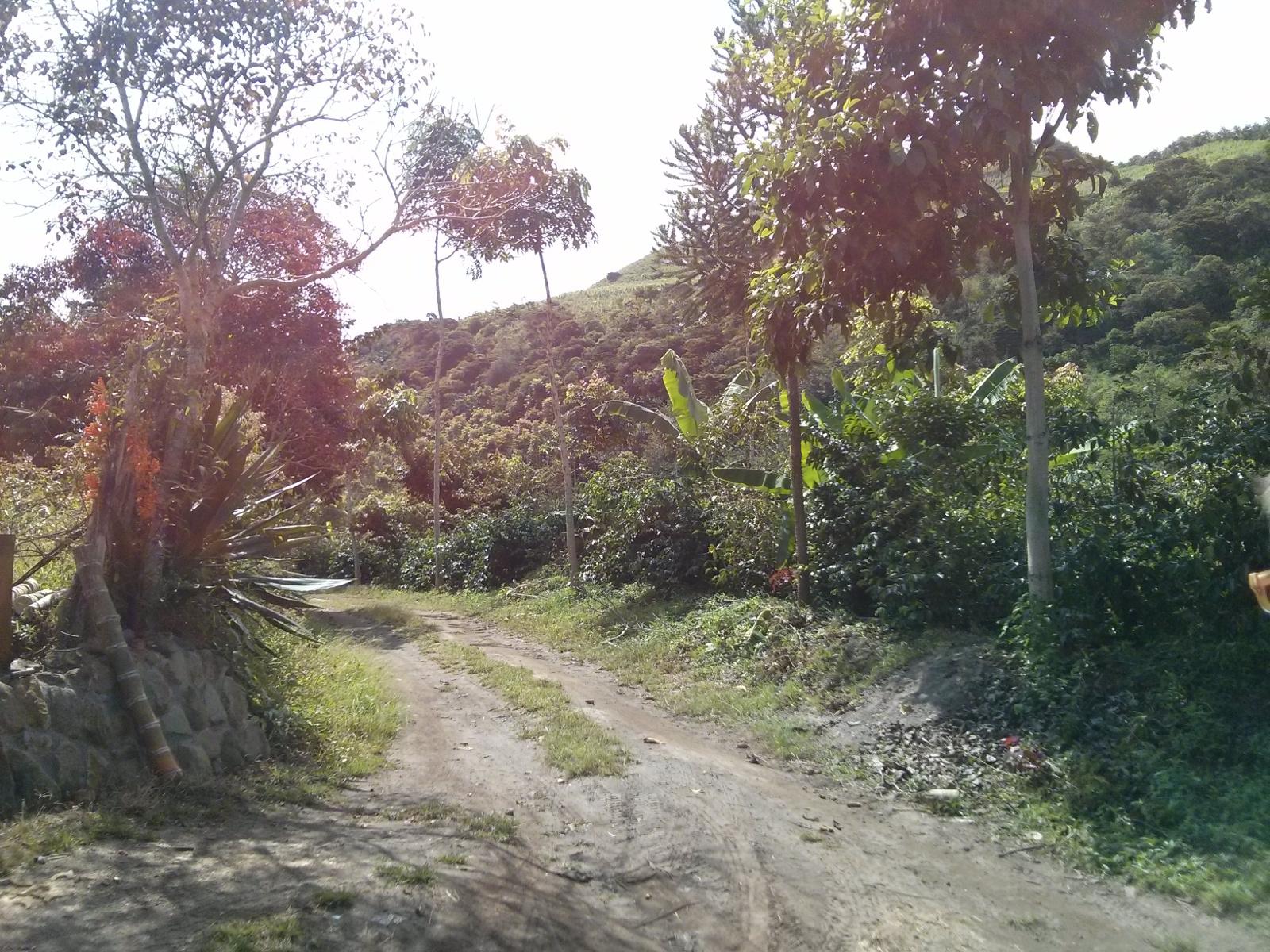 Una piantagione di caffè nella valle dell'Intag