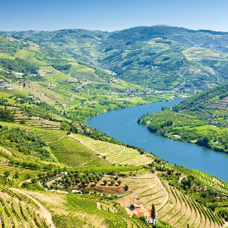 Vinyards in Douro Valley, Vila Real, Portugal