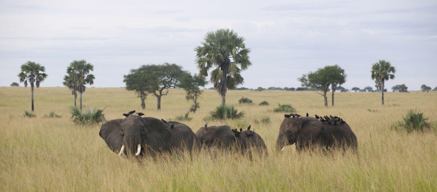 /destinations/africa/uganda/group-tours/Group tours index