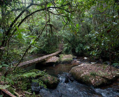 Andasibe National Park